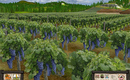 Wine_screen_1_