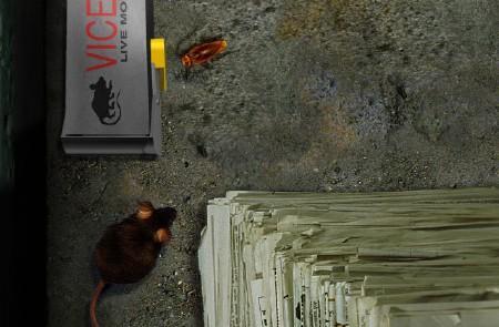 Bad Mojo: Путь таракана - Смотрится гадко. (только потому, что тараканы)