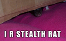 I_r_stealth_rat_by_lol_cat