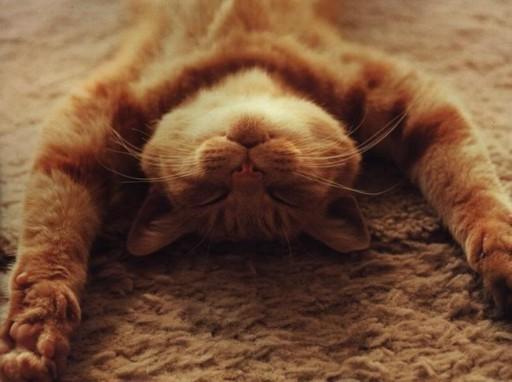 Как кота заставить спать с тобой