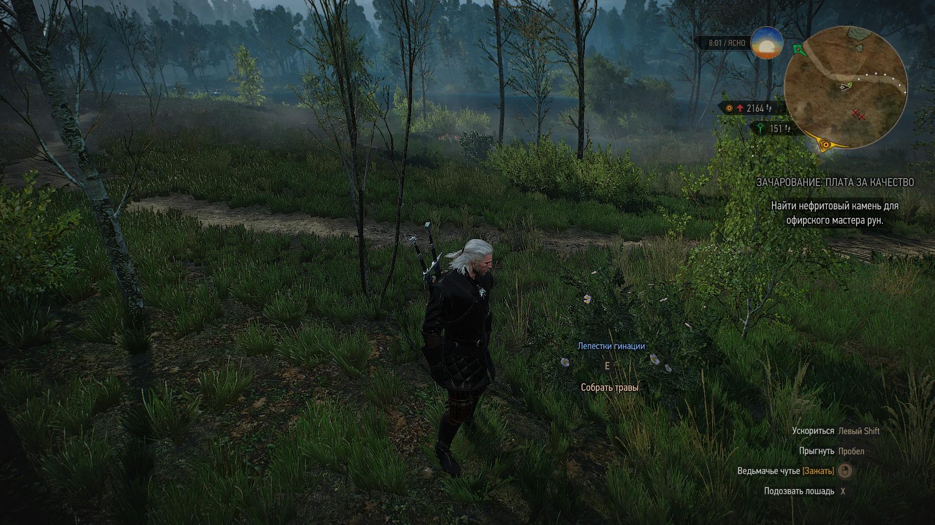 Трава Зубровка Ведьмак 3