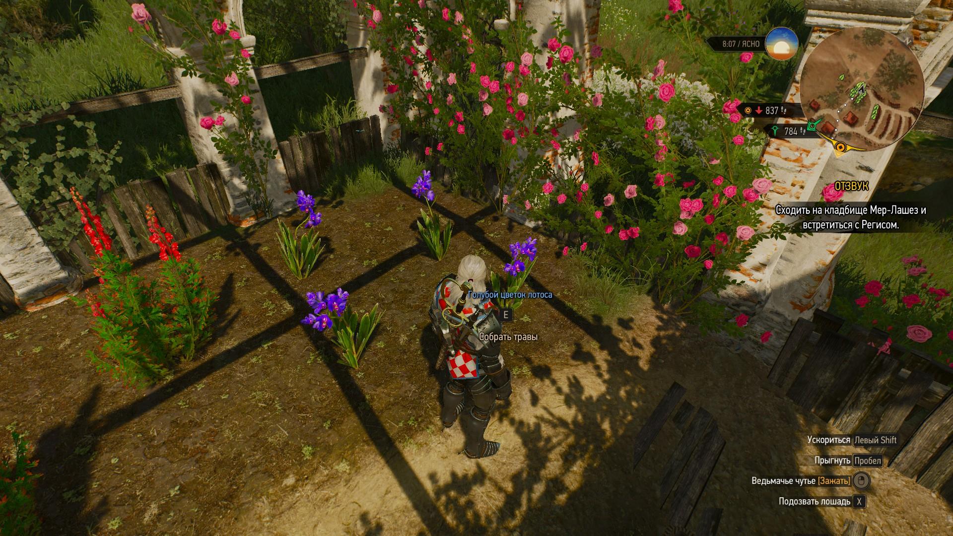 Ведьмак 3 голубой цветок лотоса